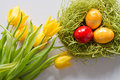 Easter Eggs with yellow tulips Royalty Free Stock Image