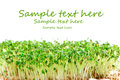 Easter garden cress sample text Royalty Free Stock Image