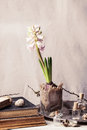 Easter interior with flower and old books hyacinth quail eggs see series Stock Photography