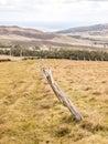 Easter Island Fences