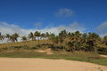 Easter island palm tree beach anakena the Royalty Free Stock Image