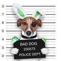 Easter mugshot dog Royalty Free Stock Photo