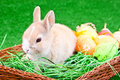 Easter nest with bunny and eggs Royalty Free Stock Photo