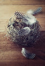 Easter nest with spotted feathers Royalty Free Stock Image
