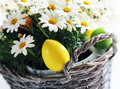 Easter photo of basket with daisy flowers and eggs Stock Photo