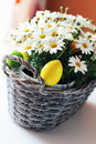 Easter photo of basket with daisy flowers and eggs Royalty Free Stock Photography