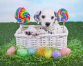 Easter Puppy Royalty Free Stock Photo