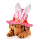 Easter puppy cute wearing an bunny hat Royalty Free Stock Photography