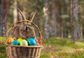 Easter Rabbit In A Basket On N...