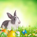 Easter rabbit in grass cute with coloured eggs free space for text Royalty Free Stock Image