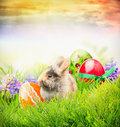 Easter rabbit on grass with eggs and spring flowers easter card fluffy Stock Photos