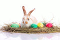 Easter rabbit in velour grasses Stock Images