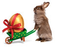 Easter rabbit with a wheelbarrow and golden egg cute bunny little green red ribbon isolated on white cg photo Royalty Free Stock Image