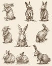 Easter rabbits vector image of a different Royalty Free Stock Photo