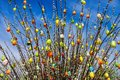 Easter shrub willow with eggs tree Royalty Free Stock Image