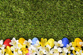 Easter spring flower and eggs border, green grass copy space
