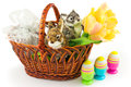 Easter springtime concept Royalty Free Stock Photo