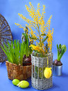 Easter still life with mimosa narcissus and muscari spring flowers decorative eggs on a blue background Stock Image