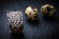 Easter still life with quail eggs on black background Royalty Free Stock Photos