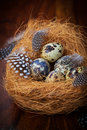 Easter still life with quail eggs in nest Stock Image