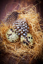 Easter still life with quail eggs in nest Royalty Free Stock Images