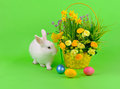 Easter sweet fluffy white bunny basket daffodils other flowers colored eggs green background Royalty Free Stock Photography