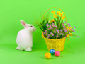 Easter sweet fluffy white bunny basket daffodils other flowers colored eggs green background Stock Photos