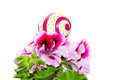 Easter symbol of life macro Royalty Free Stock Photography