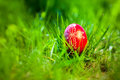 Easter traditional egg in the fresh spring grass sunlight Royalty Free Stock Photography