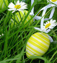 Eastereggs are on the meadow traditional must be found Royalty Free Stock Image