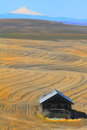 Eastern oregon farmland showing harvested grain rows with snow capped mt hood in the distance and an old shed in the foreground Stock Photos