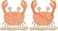 Easy crab maze