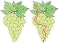 Easy grapes maze