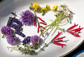 Eatable flowers fresh from garden Royalty Free Stock Photography