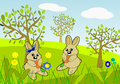 Eating carrots two funny rabbits out in nature Stock Images