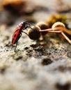 Eating firebug ftom fruit Royalty Free Stock Photography