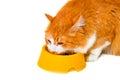 Eating orange and white cat Royalty Free Stock Photo