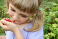 Eating red currant Royalty Free Stock Photos
