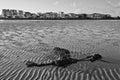 Ebb seaweed in tide with sunrise sandbanks poole uk Royalty Free Stock Photo