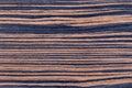 Ebony veneer texture of rich grain Royalty Free Stock Image