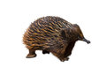 Echidna isolated Royalty Free Stock Photo