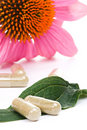 Echinacea capsules Stock Photos