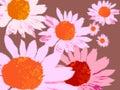 Echinacea flower motif Royalty Free Stock Image