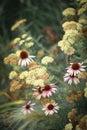 Echinacea natural bouquet