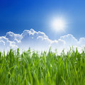 Eco background beautiful nature green grass bright sun blue sky white clouds Stock Photography