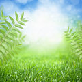 Eco background beautiful nature green grass leaves bright sun blue sky green energy Stock Image