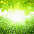 Eco background beautiful nature green grass maple leaves bright sun green energy Stock Photos