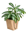 Eco bag and plant isolated Royalty Free Stock Photography