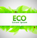 Eco Banner Royalty Free Stock Photos
