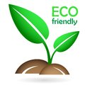 Eco concept - green young sprout Royalty Free Stock Photo